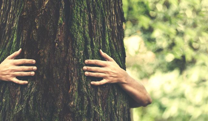 Manos abrazando un árbol en plena naturaleza